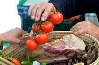 Ab jetzt gibt's klimafreundliche Tomaten