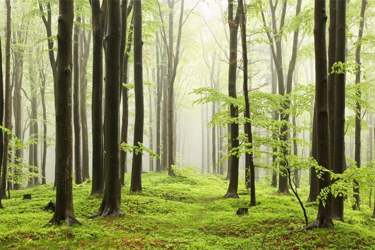 Deutschland hat zu wenige Naturwälder