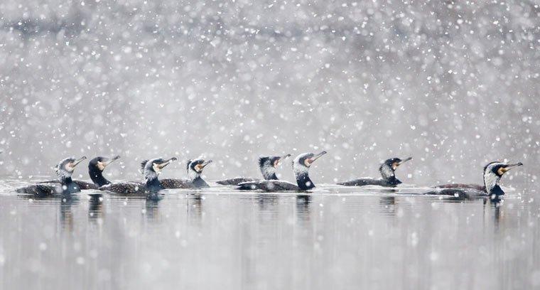 Biologische Vielfalt: Gewinner des UN-Fotowettbewerbs