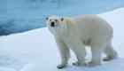 Shell: US-Regierung erlaubt Ölbohrungen in Arktis