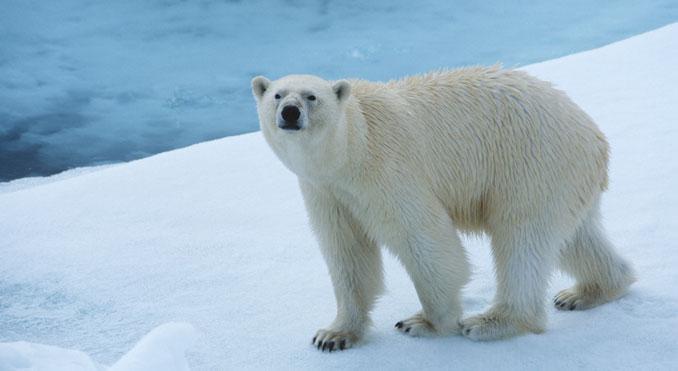 Ölbohrungen in der Arktis müssen gestoppt werden