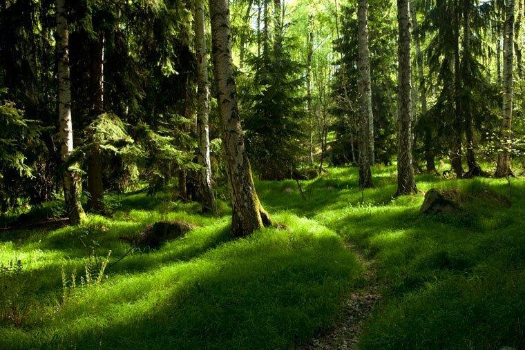 Hilfe zum Erhalt der letzten Urwälder Europas