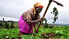 Hilfe für kenianische Farmerinnen