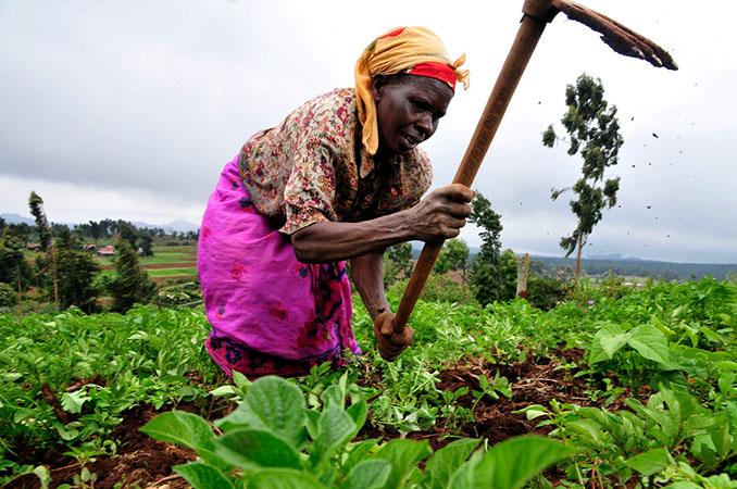 Eine kenianische Farmerin bei der täglichen Arbeit © CIAT (CC BY-SA 2.0)