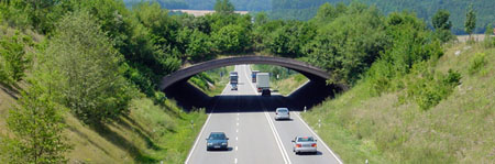 Grünbrücken werden von Wildtieren tatsächlich aktiv genutzt © M.Strein/ BUND