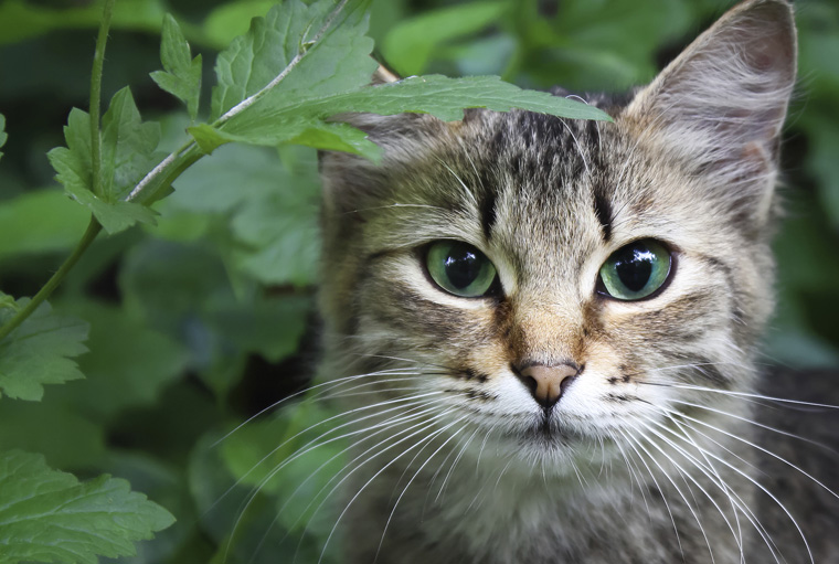 Der sogenannte Katzenabschuss ist in NRW nicht mehr erlaubt