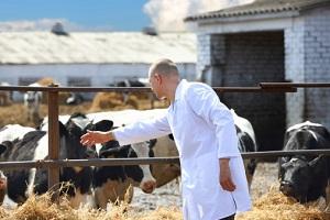 Tierärzte in der Landwirtschaft © jenoche/iStock/Thinkstock