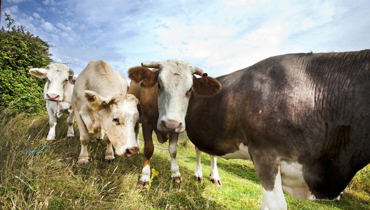 Damit allerdings ein grundlegender Wandel zu mehr Nachhaltigkeit in der Lebensmittelindustrie stattfinden kann, bedarf es nach Meinung von Naturland eine klare Linie der Politik.