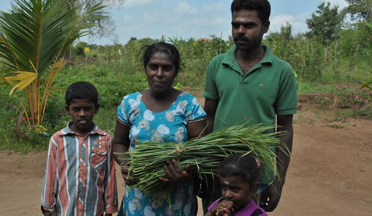 In Sri Lanka hilft Oxfam beim Aufbau biologischer Hausgärten