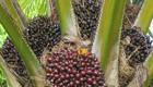 Palmöl in Deutschland