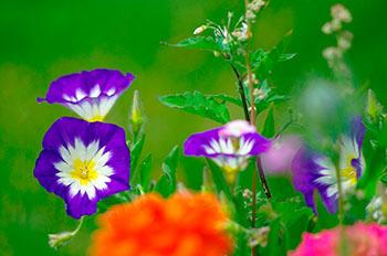 Gentechnisch veränderte herbizidresistente Pflanzen sind nachweisbar schädlich für Natur und Umwelt © Peter Freitag pixelio.de