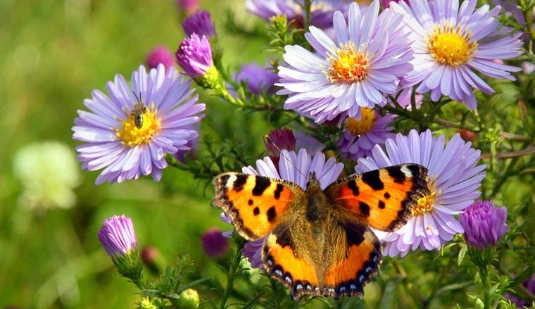 Leider wahr: Eine Studie über 200 Jahre belegt, dass immer mehr Schmetterlingsarten vom Aussterben bedroht sind.