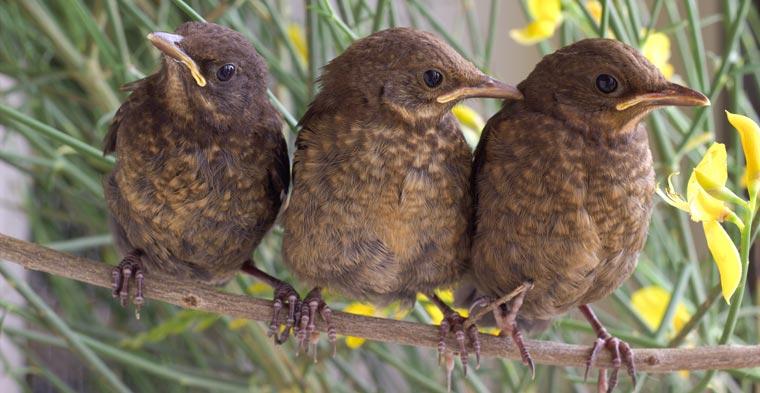 Vogelbestände: Trotz bundesweiter Bemühungen sind die Bestände rückläufig.