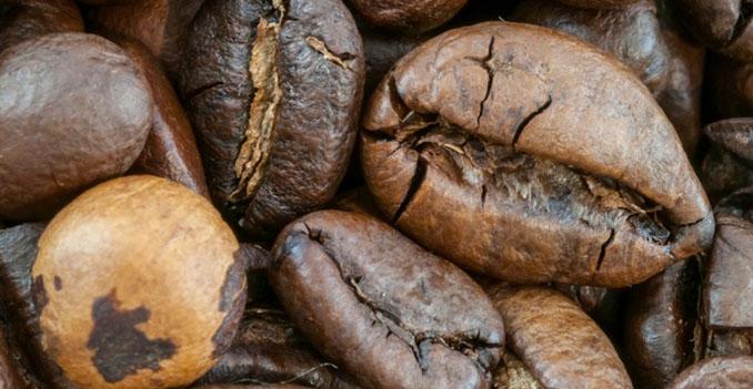 Die Produktion von Kaffee funktioniert auch gänzlich ohne Giftstoffe © Francesco Carniani (iStock / thinkstock)