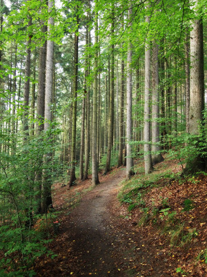 Pflege Wälder