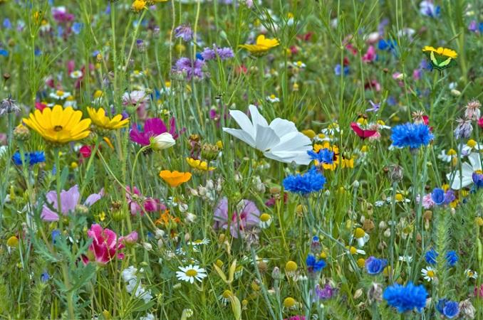 Artenvielfalt NRW