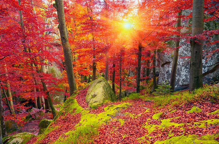 Die alten Buchenwälder sind ein einzigartiges Ökosystem.