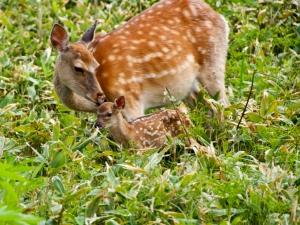Biodiv.strategie/Artenvielfalt MITSUHARU MAEDA (amanainagesRF/Thinkstock Photos)