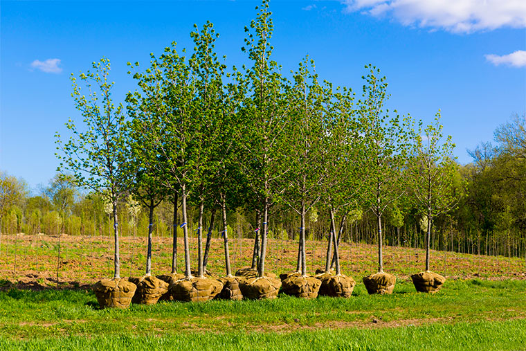 Bäume pflanzen für Klimaneutralität