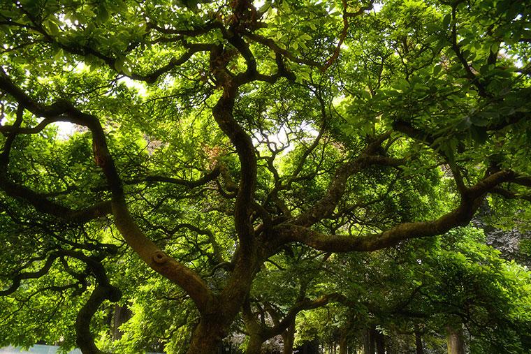 Bäume geben uns Kraft