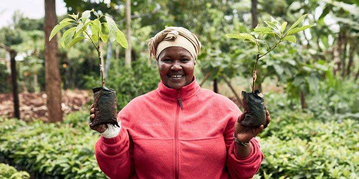 Eine Welt voller Gründe, Bäume zu verschenken