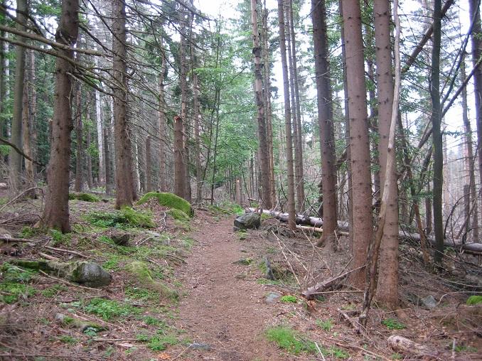 Bayerische Wald ©Florian Weber