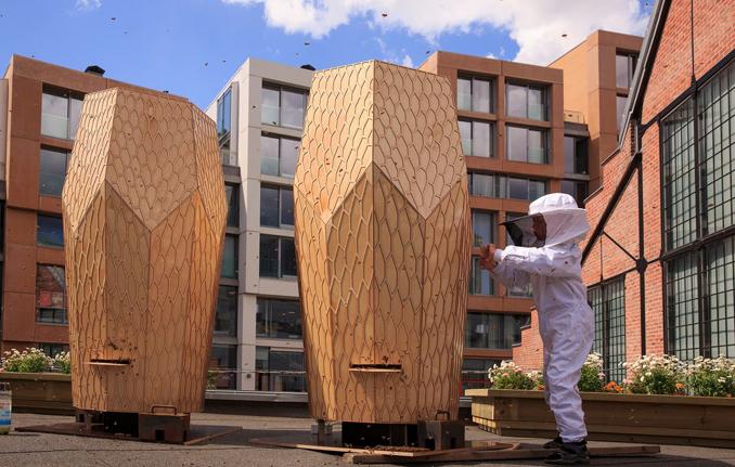 Bienen Lebensraum in der Stadt schaffen