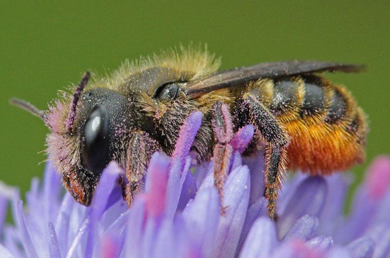 Bienen brauchen dringend unsere Hilfe.