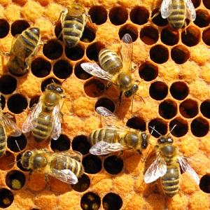 Die Bienen haben ein neues Zuhause. © Pete_Flyer/iStock/Thinkstock