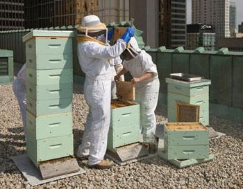 Fachleute montieren das Insektenhotel nach den Bedürfnissen der Bienen © Fairmont Hotels & Resort