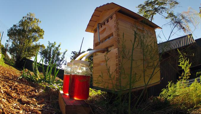 Bienen mit tollem Bienenstock