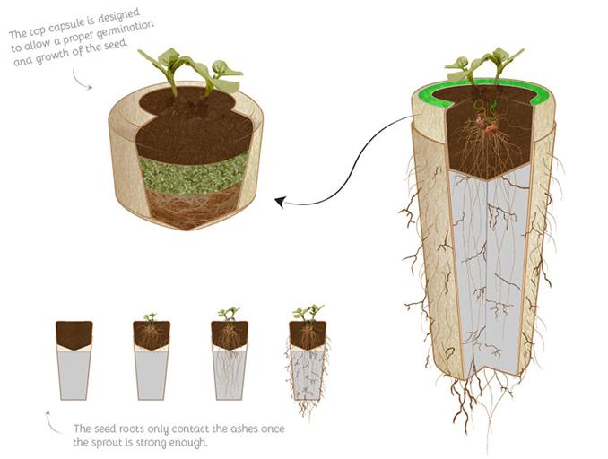 Nach dem Tod zum Baum Bio Urnen