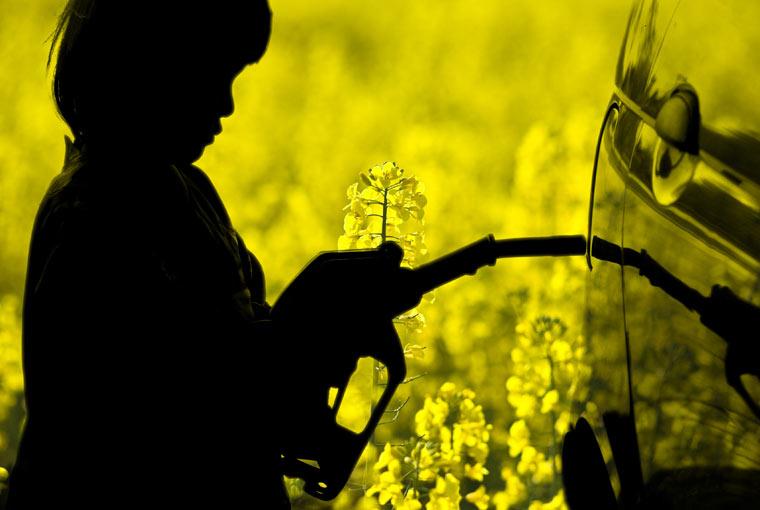 Tierischer Kraftstoff als Klimaretter?