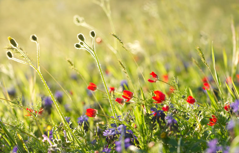 Schutz der Biodiversität muss besser werden