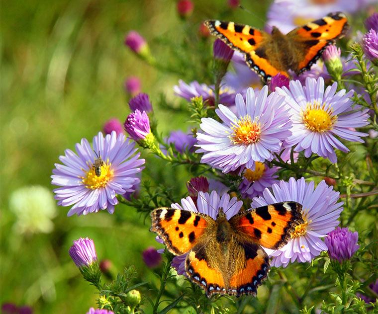 Insekten und Schmetterlinge