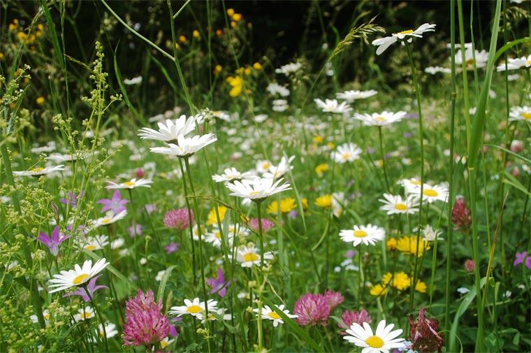 Blumen pflanzen gegen das Bienensterben
