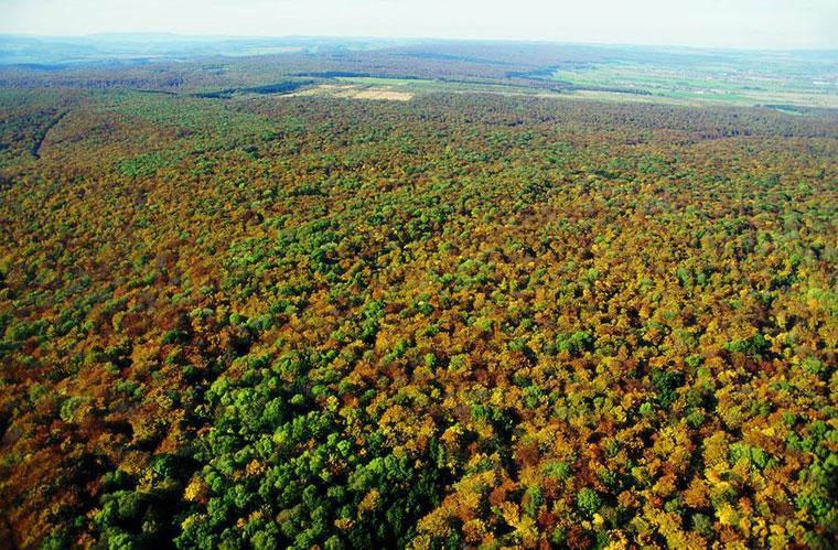 Noch prägen die alten Buchenwälder das Erscheinungsbild von Europa.