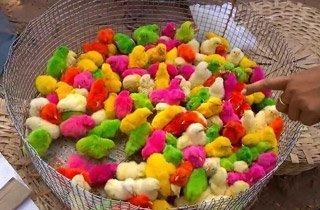 Bunte Osterküken werden als Spielzeug verkauft