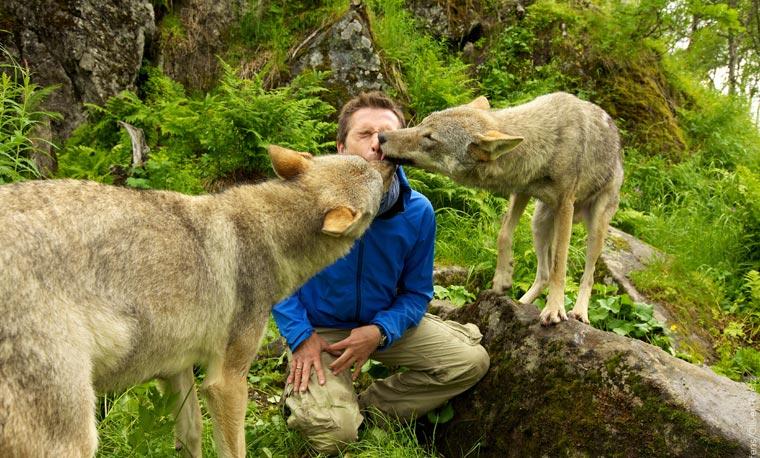 Teil Des Rudels, die Wölfe scheinen Fan von Dirk Steffens zu sein