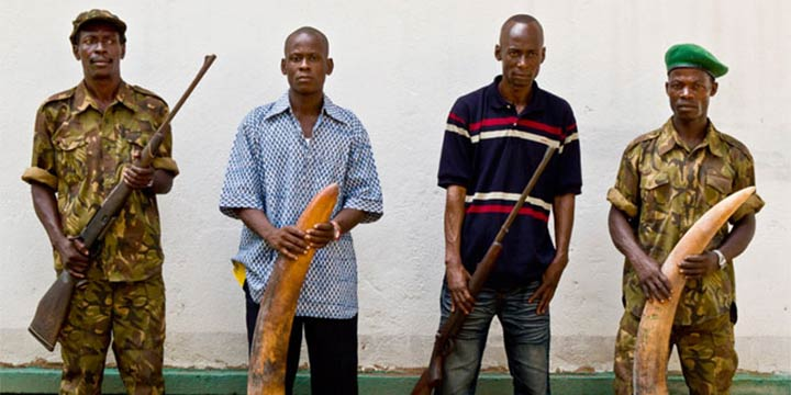 Kongobecken: ein Paradies gezeichnet von Elfenbein-Jagd