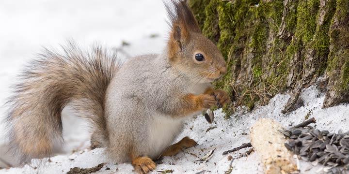 Der nachhaltige Umgang mit Wildtieren in der kalten Jahreszeit