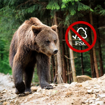 Illegale Abholzungen rauben Bären den Lebensraum