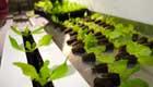 Container als Gewächshaus Urban Farming Revolution