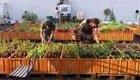 Urban Gardening, Städte werden grün