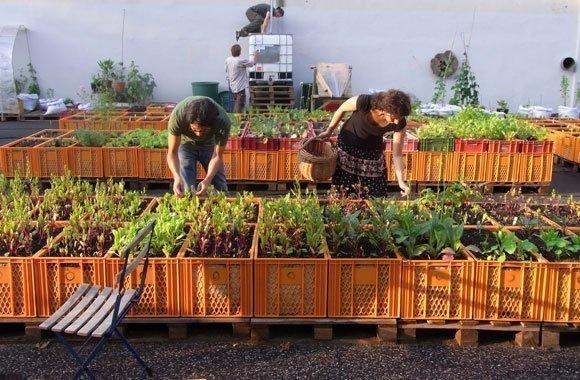 Urban Gardening von Berlin über Köln bis München - Essbare Städte