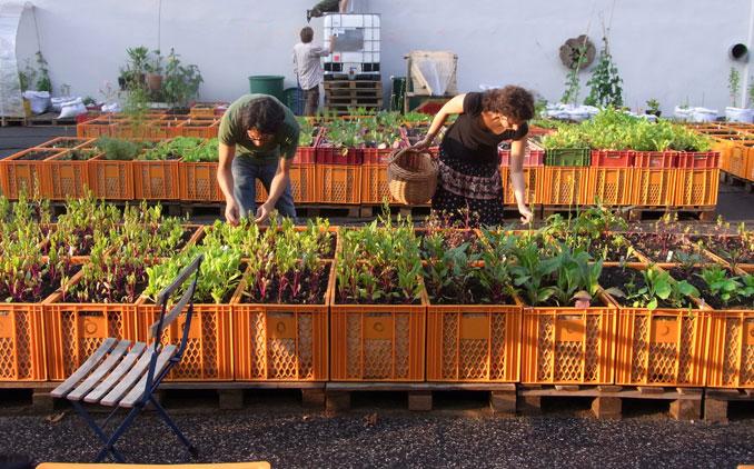 Die urbanen Gärten werden gemeinsam genutzt