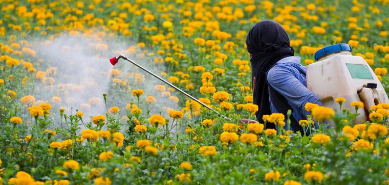 Das umstrittene Pflanzenvernichtungsmittel Glyphosat wird für weitere 18 Monate zugelassen