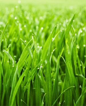Gras als nachhaltiger Rohstoff für Verpackungen