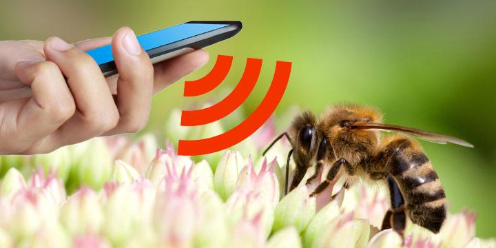 Ist die Handystrahlung Schuld am massenhaften Bienensterben?