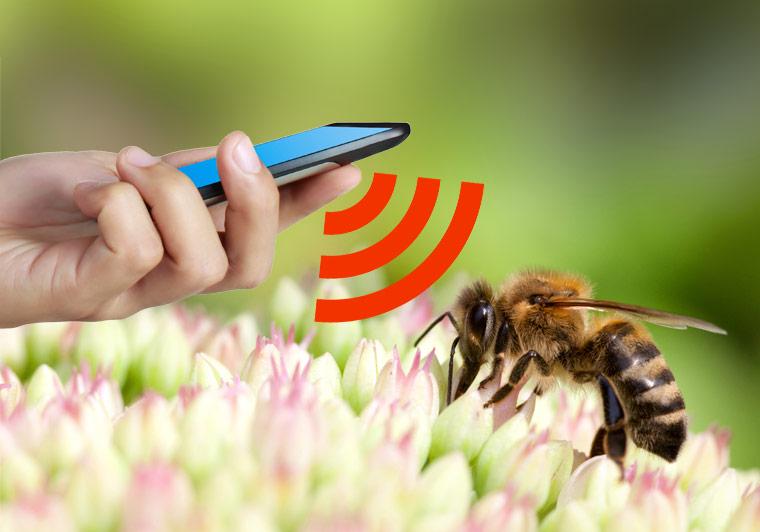 Bienensterben durch Handystrahlung?